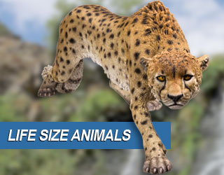 Life Size Animals